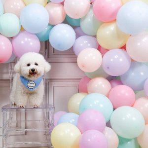 Trang trí bong bóng tiệc sinh nhật